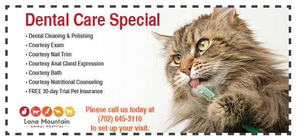 Lone mountain animal hospital 2016 Dental Coupon
