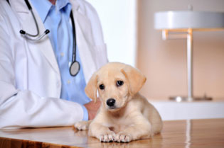 Pet insurance, veterinary, care