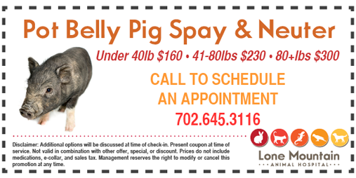 LMAH Pot Belly Pig Coupon