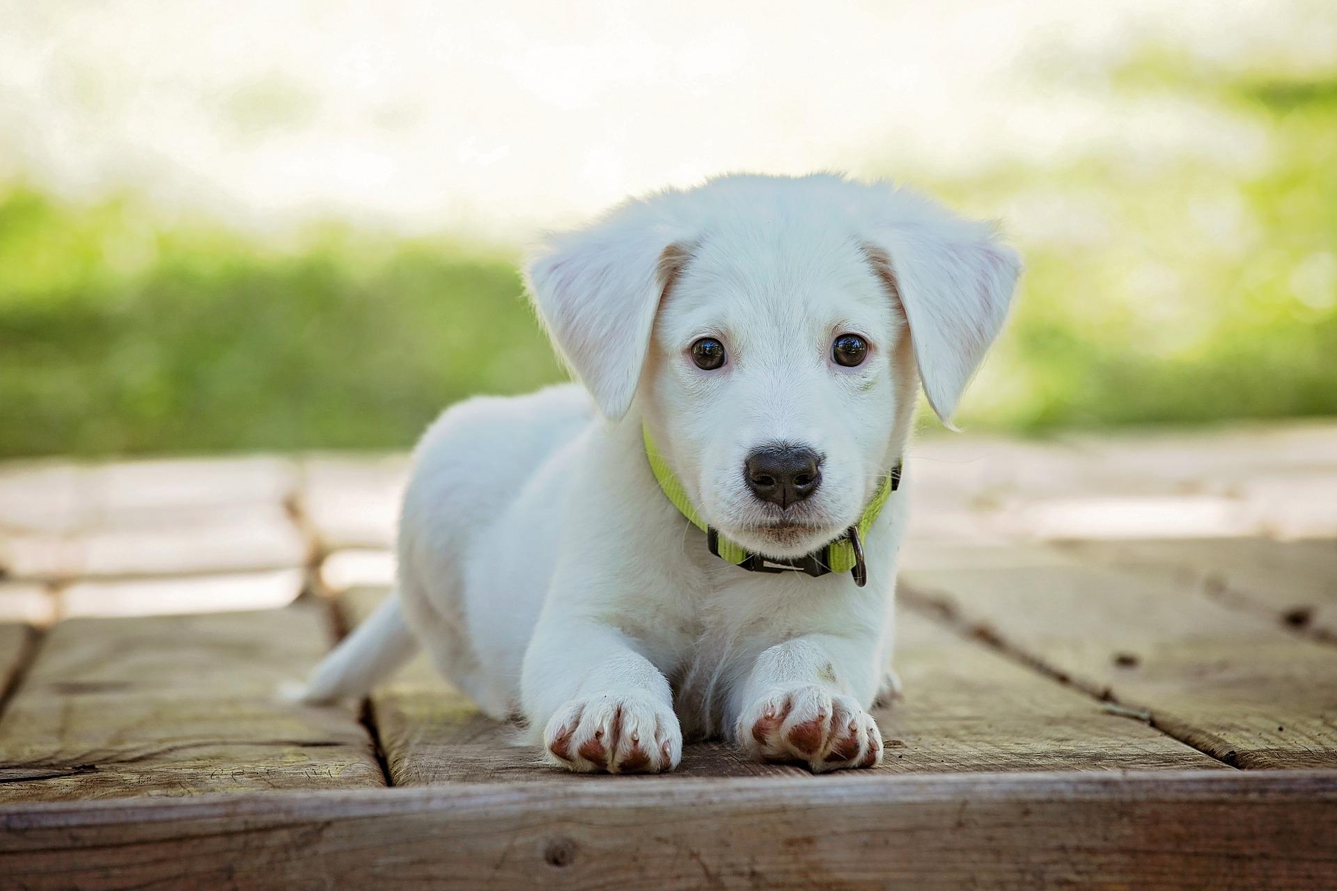 Be proactive, not reactive – Pet Wellness Special